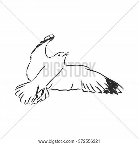Seagull Bird Animal Sketch Engraving Vector Illustration. Scratch Board Style Imitation. Hand Drawn