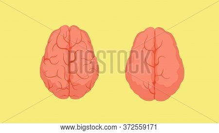 Structure Of Smart Human Brain And Stupid