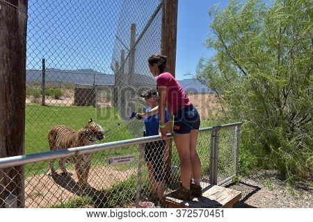 Usa, Arizona, 11,07,2016 Tourists Feed The Tiger Under The Care Of The Caretaker In The Wildlife Par