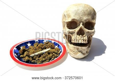 Human Skull With Marijuana. Cannabis. Pot. Medical Marijuana. Recreational Marijuana. Human Skull isolated on white with Cannabis Buds. Medical and Recreational Cannabis or Marijuana. Room For Text.