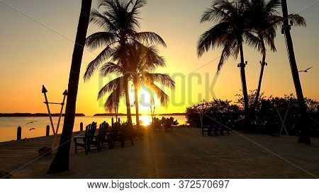 Palm Trees In The Backlight On A Paradise Bay In Florida- Islamorada, Florida - April 12, 2016
