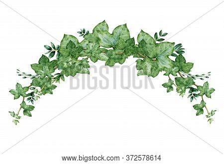 Green Ivy Arch Bouquet Watercolor Illustration. Hand Drawn Decorative Hedera Border. Evergreen Garde