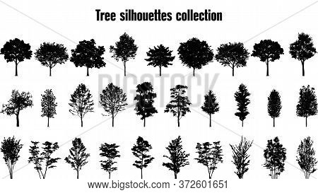 Trees Silhouette Collection. Set Of 29 Trees. Vector