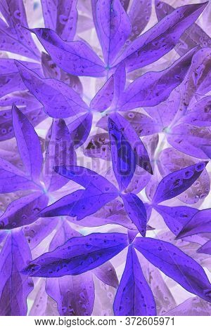 Bright And Catchy Purple Floral Background. Peony Foliage Close-up. Spectacular Violet Backdrop Or W