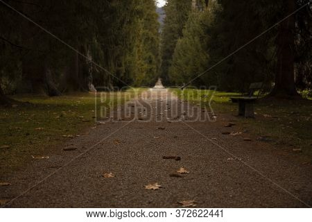 Soft Focus Ground Dirt Trail Passage In Autumn Park Outdoor September Scenic View Nature Environment