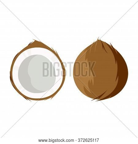 Coconut Isolated On White Background, Vvector Illustration Of Colorful Half And Whole Of Juicy Cocon
