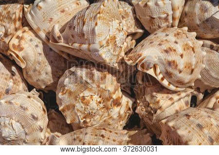 Top View Close Up Of Mollusk.texture Of Shells Top View. Concept Group Of Sea Shells. Sea Mollusks C