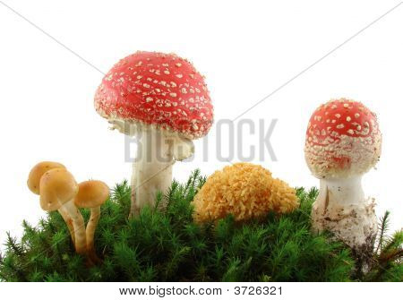 Mushrooms isolated over white background growing from the grass and moss. poster