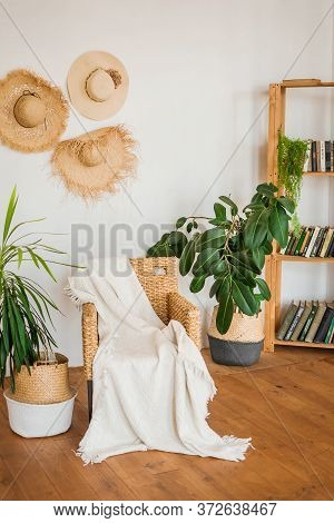 Bright Living Room Interior In A Tropical Villa. Armchair, Bookcase, Palm Trees In Baskets And Wicke