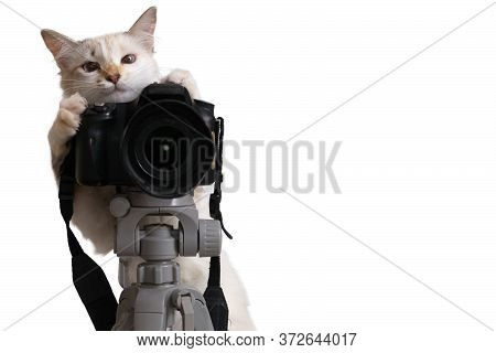 Funny Beige Cat Is Photographer With Dslr Camera On Tripod. Isolated On White Background With Clippi
