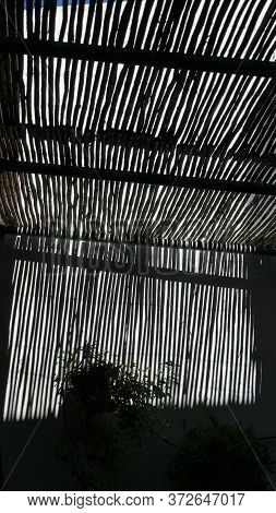Monochrome Bamboo Covering Letting In Small Amount Of Daylight