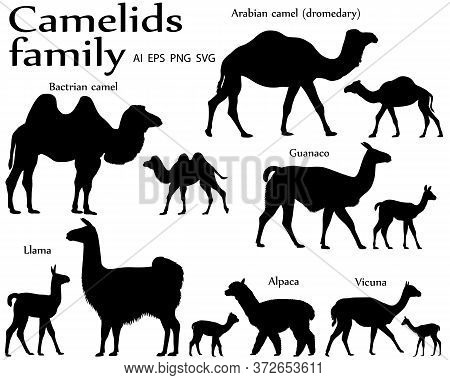 Collection Of Different Species Of Mammals Of Camel Family, Adults And Cubs, In Silhouette: Bactrian