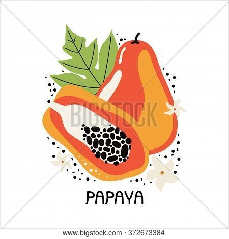 Juicy Orange Papaya With Leaves And Flowers. Hand Drawn Slice Of Tropical Fruit With Flesh And Seeds