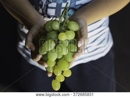 Child's Hands Holding A Bunch Of Grapes Bunch Of Green Seedless Grapes