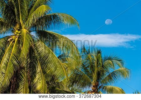 Waning Moon Out Of Focus In The Afternoon On A Blue Sky In Thailand On Samui Island, In The Foregrou