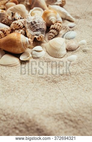 Sea Shells Of Many Types And Sizes Lie In The Sand. Place For Text.