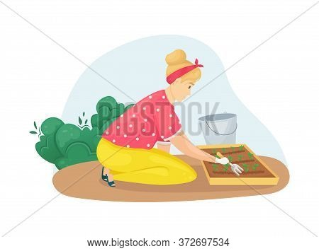 A Woman Sitting On Her Knees Loosens A Bed Of Seedlings. Planting, Growing Vegetables. The Care Of T