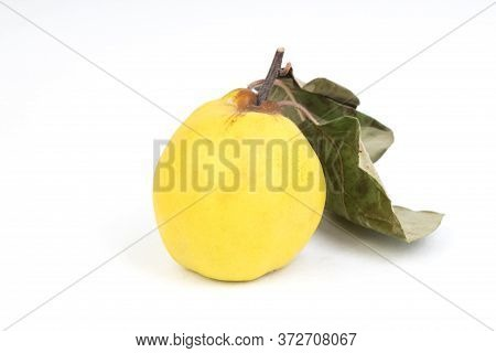 Isolated Quince. One Fresh Quince Fruit With Leaf Isolated On White Background.