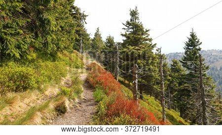Walking Path In Colorful Mountain, Jeseniky, Czech Republic.