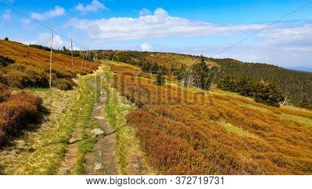 Walking Path With Winter Pole Marking On The Colorful Ridge Of Jeseniky Mountains, Czech Republic.