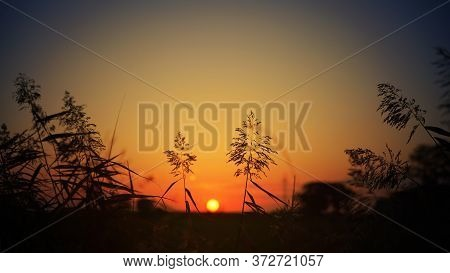 Grass At Dusk Against The Backdrop Of A Picturesque Sunset.