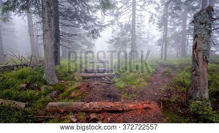 Decomposing Remains Of Wooden Walking Path Pavement In The Forest During Foggy Weather, Jeseniky, Cz