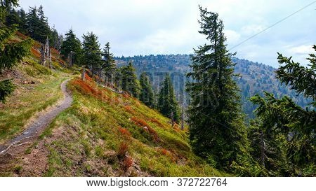 Walking Tourist Marked Path In Hillside In The Jeseniky Mountains, Czech Republic.