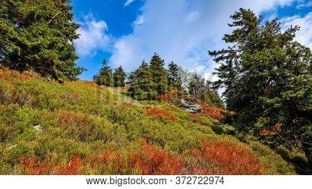 Colorful Vegetation In Mountain Hillside, Jeseniky, Czech Republic.