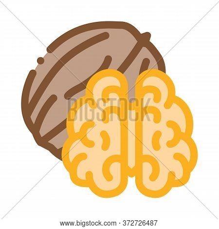 Walnut Nut Icon Vector. Walnut Nut Sign. Color Symbol Illustration