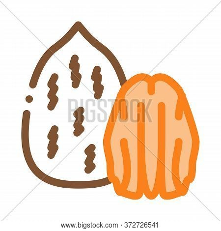 Pecan Nut Icon Vector. Pecan Nut Sign. Color Symbol Illustration