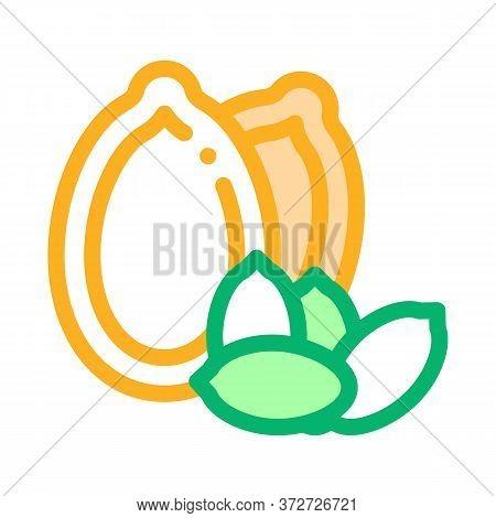 Pumpkin Nut Icon Vector. Pumpkin Nut Sign. Color Symbol Illustration