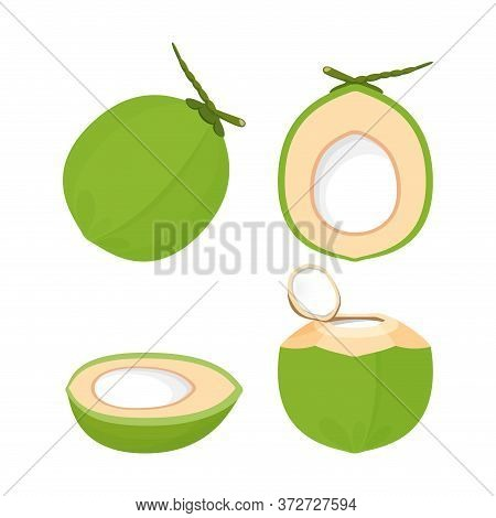 Coconut Fresh Green Isolated On White, Illustration Coconut