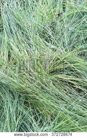 Fresh Cut Grass Background On Summer Field