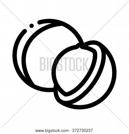 Macadamia Nut Icon Vector. Macadamia Nut Sign. Isolated Contour Symbol Illustration