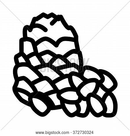Pine Nut Icon Vector. Pine Nut Sign. Isolated Contour Symbol Illustration