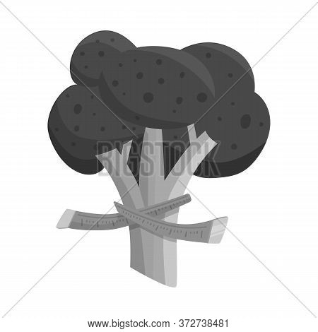 Isolated Object Of Broccoli And Doodle Icon. Collection Of Broccoli And Salad Stock Symbol For Web.