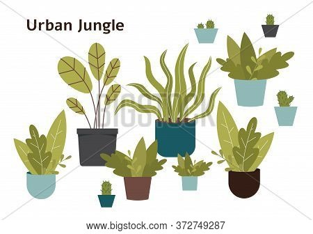 Urban Jungle - Hand Drawn Home Plant Set Isolated On White Background.