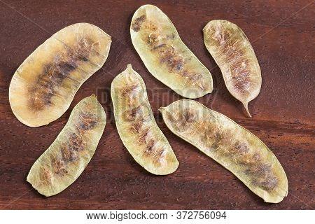 Acacia Pods - Senna Alexandrina - Cassia Acutifolia