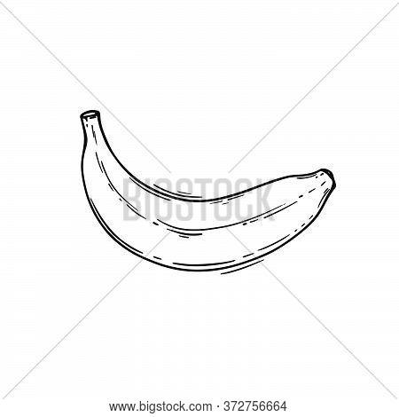 Banana Tropical Fruit Health Nutrition Paleo Keto Vegetarian Diet Botanic Nature Hand Drawn Vector I