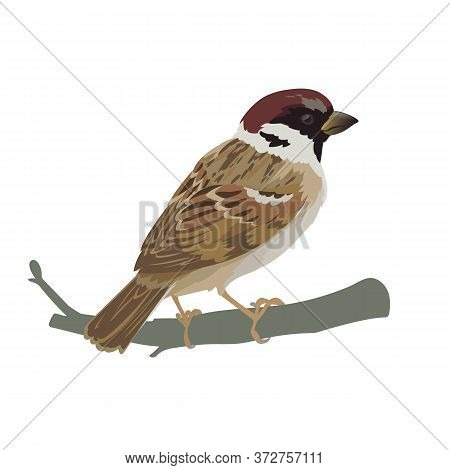 Realistic Sparrow Sitting On A Branch. Colorful Vector Illustration Of Little Bird Sparrow In Hand D