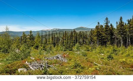 Forested Hilly Landscape With Withered Tree Branches In The Foreground, Krkonose Mountains, Czech Re
