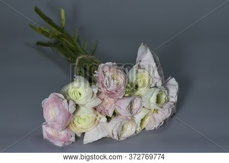 Spring Flowers Bouquet. Pink And White Ranunculus Flowers Isolated On Gray Background. Beautiful But