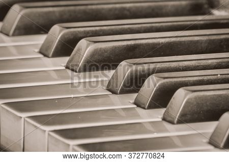 Ebony And Ivory Piano Keys At An Angle In Black And White