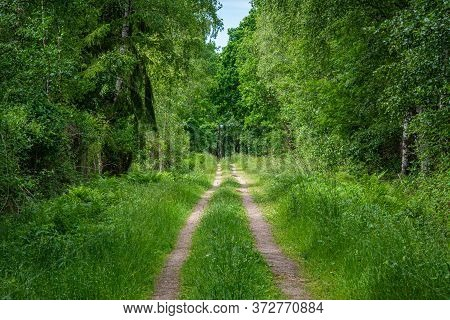 Small Farm Road Going Through A Lush, Green Summer Forest In Scania, Southern Sweden