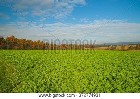Expansive Landscape Of Green Fields Surrounded By Autumn Colored Trees With Fresh Kale Crop Growing