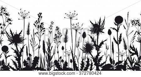Seamless Horizontal Border With Wild Flowers And Thistle Silhouettes. Hand Drawn Vector Illustration