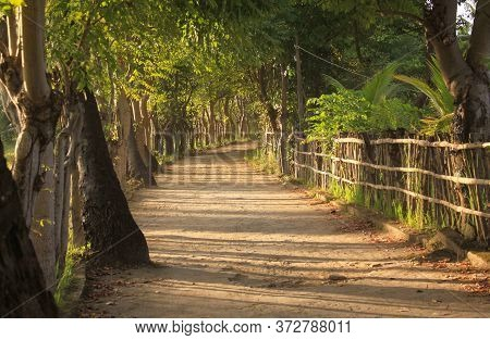 Empty Inland Rural Dirt Road In Afternoon Warm Light, With Trees, Fence And Green Vegetation On Gili
