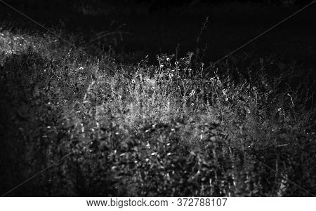 Black And White Herbal Vegetation Detail Of Flowers And Grass In Field