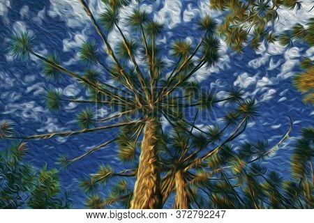 Pine Treetops Amid Lush Forest In The Aparados Da Serra National Park Near Cambara Do Sul. A Small C