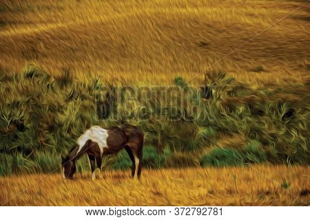 Horse Grazing On Landscape Of Rural Lowlands Called Pampas With Dry Bushes Near Cambara Do Sul. A Sm